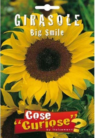 GIRASOLE BIG SMILE